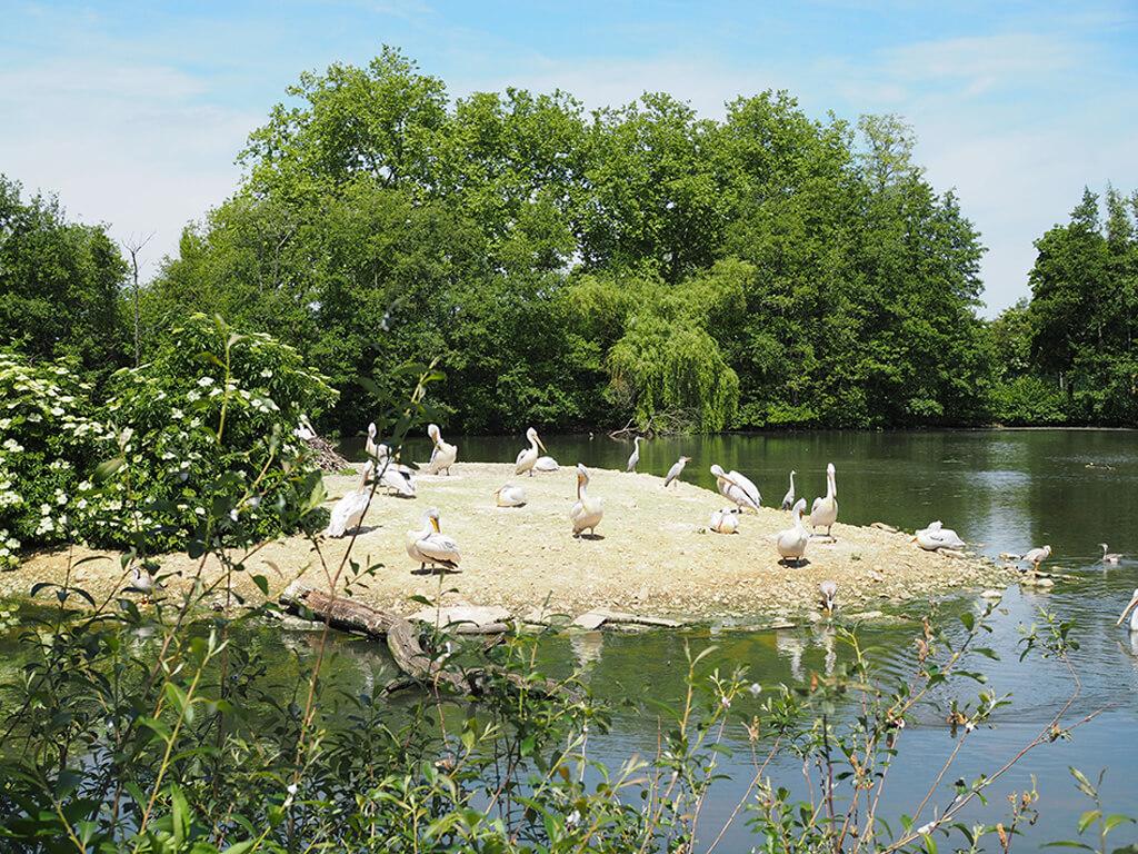 Parc aux oiseaux, enbalades.com